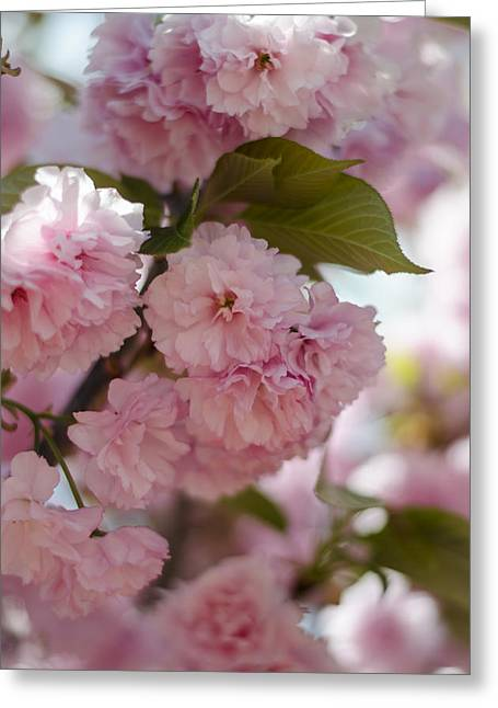 Bursting With Blooms Greeting Card by Heather Applegate