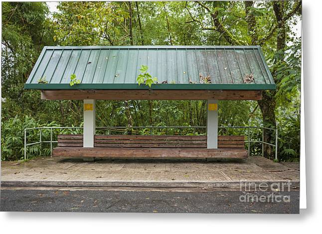 Bus Stop Bench In The Rainforest  Greeting Card