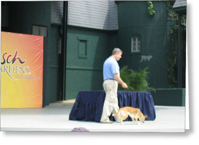 Busch Gardens - Animal Show - 121223 Greeting Card by DC Photographer