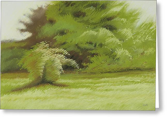 Bush And Brush Greeting Card by Bruce Richardson