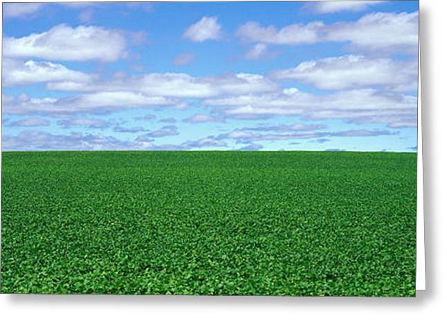 Bush Bean Field, Mcminnville, Oregon Greeting Card