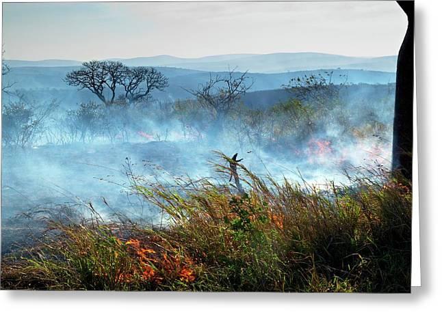Bush Fire Greeting Card by Bildagentur-online/mcphoto-schaef