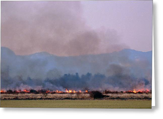 Bush Fire In British Columbia Greeting Card by David Nunuk/science Photo Library