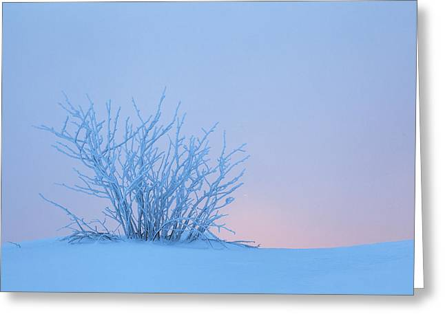 Bush In Snow In Morning Vosges France Greeting Card by Heike Odermatt