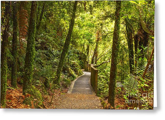 Bush Pathway Waikato New Zealand Greeting Card