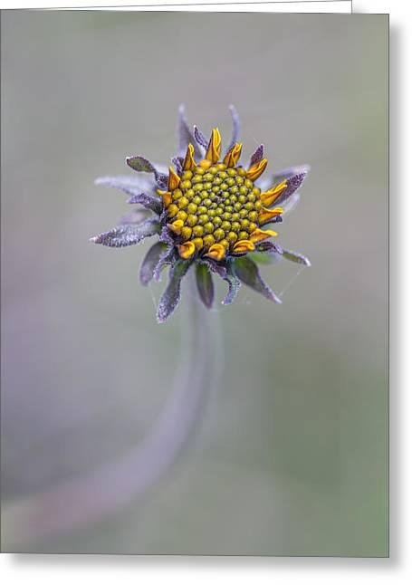 Bush Sunflower Opening Greeting Card