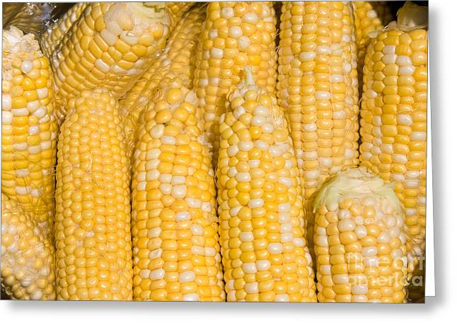 Bushel Of Pealed Corn  Greeting Card