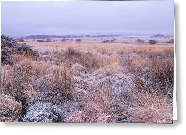 Bushes On A Landscape, Dartmoor, Devon Greeting Card by Panoramic Images