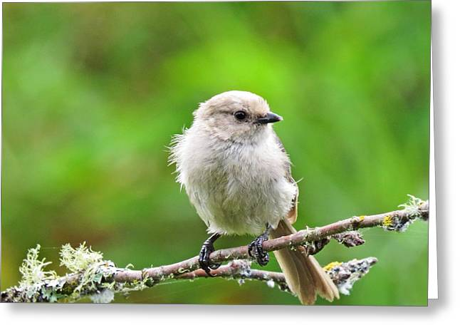 Bushtit Greeting Card