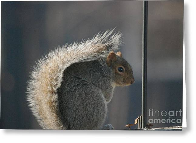 Greeting Card featuring the photograph Bushy Tail by Mark McReynolds