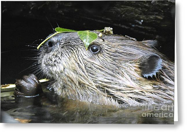 Busy Beaver Greeting Card