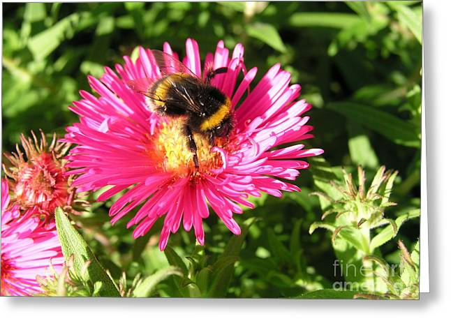 Busy Bee Greeting Card by Bev Conover