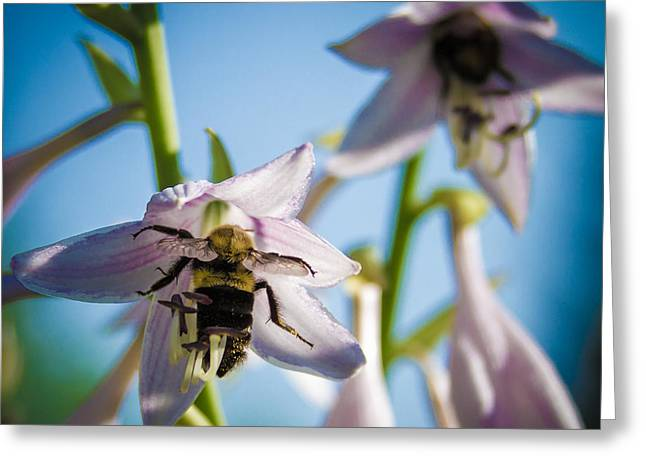 Busy Bee Greeting Card by Brian Caldwell