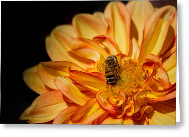 Busy Bee Dahlia Greeting Card by Linda Villers