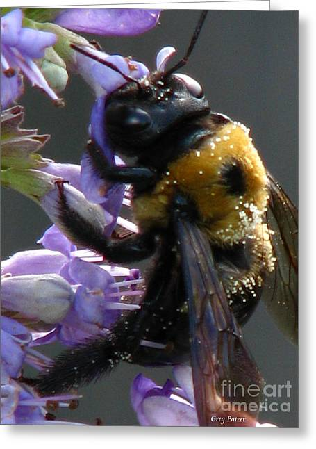 Busy Bee Greeting Card by Greg Patzer