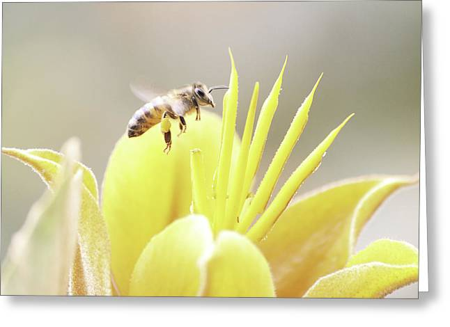 Busy Bee Greeting Card by Luna Curran