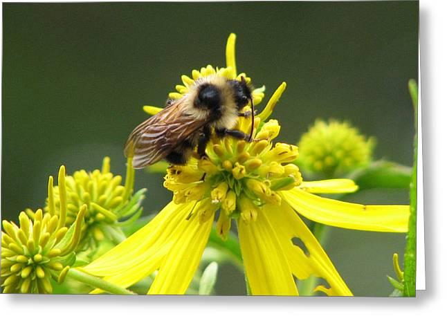 Busy Bee Greeting Card by Lynn Berney