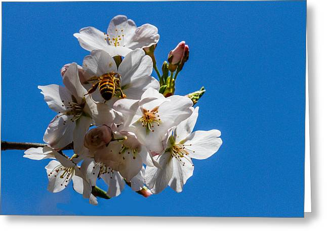 Busy Bee Greeting Card by Robert Hebert
