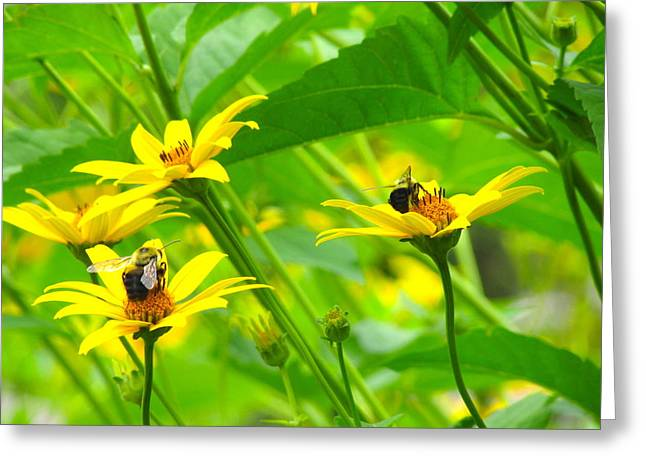 Busy Bees Greeting Card by Andrea Dale