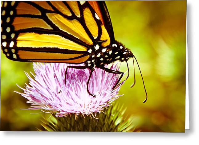 Greeting Card featuring the photograph Busy Butterfly by Cheryl Baxter