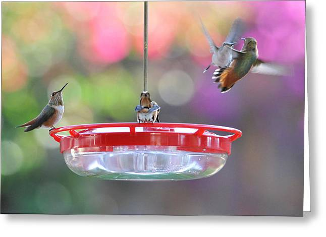 Busy Day At The Feeder Greeting Card by Lynn Bauer
