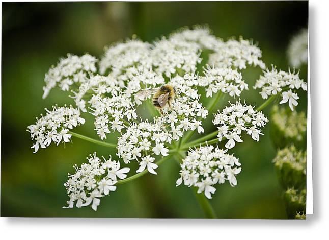 Busy May Bee Greeting Card