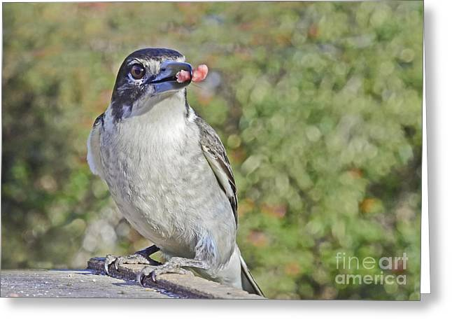 Butcherbird With Meat Greeting Card by Christopher Edmunds