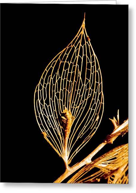 Butcher's Broom Leaf Skeleton Greeting Card