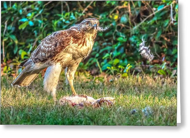 Greeting Card featuring the photograph Buteo Jamaicensis by Rob Sellers