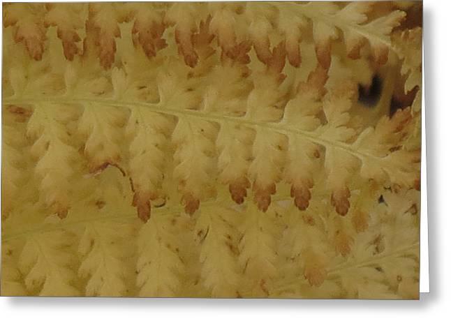 Butter Ferns Greeting Card
