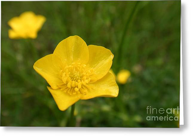 Buttercup Collection Photo 2 Greeting Card