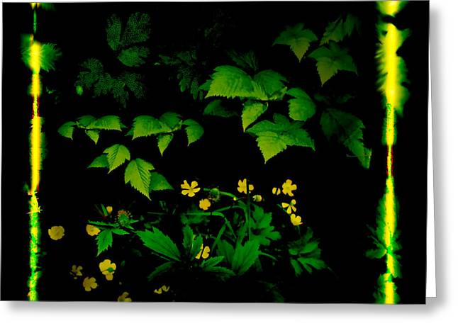 Buttercups In Forest 1 Greeting Card