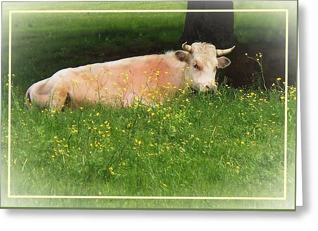 Buttercup Greeting Card by Joy Nichols