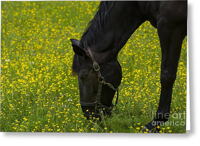 Buttercup Food Greeting Card