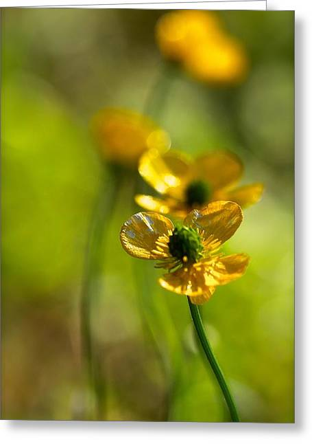 Buttercups I Greeting Card