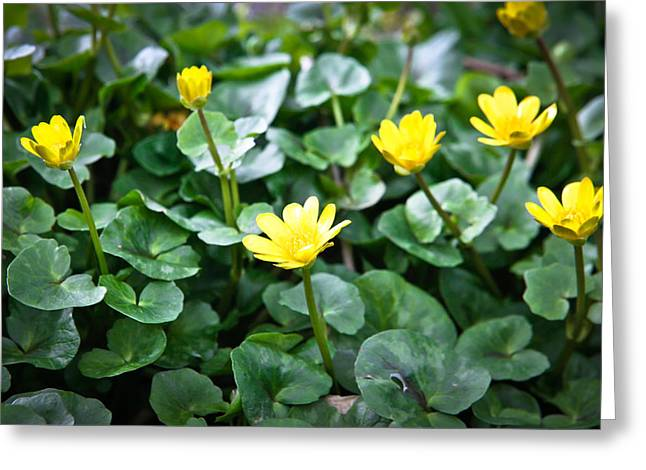 Buttercups Greeting Card