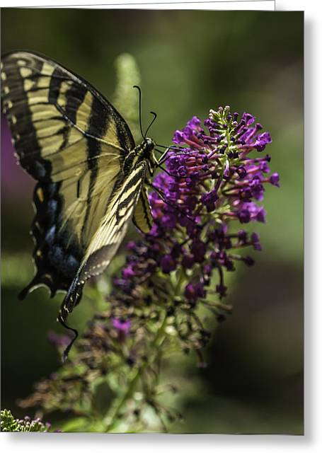 Butterflies Along The Blue Ridge Greeting Card
