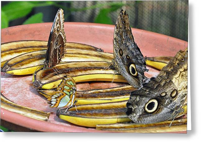 Butterflies And Bananas Greeting Card by Cherie Haines