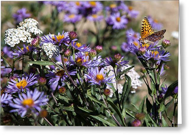 Butterflies And Wildflowers Greeting Card by Christopher D Elliott