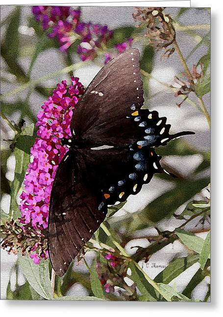 Greeting Card featuring the photograph Butterflies Are Free by James C Thomas
