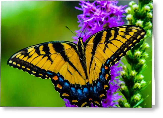 Greeting Card featuring the photograph Butterflies Are Free by Louis Dallara