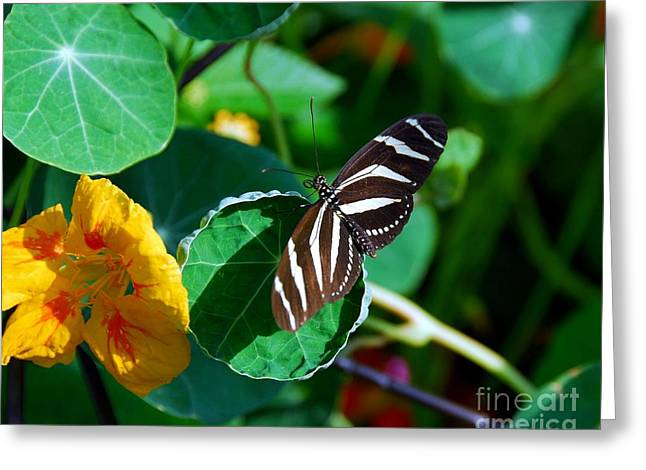 Butterflies Are Free Greeting Card by Mel Steinhauer