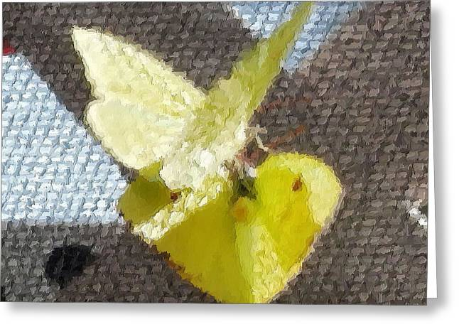 Sulfur Butterflies Mating Greeting Card