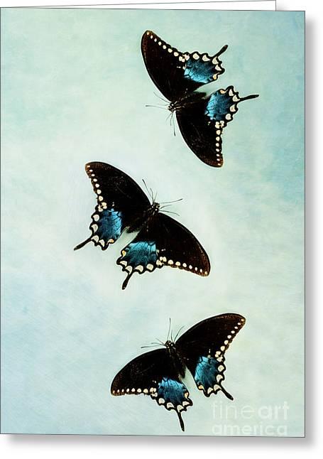 Butterflies In Flight Greeting Card by Stephanie Frey