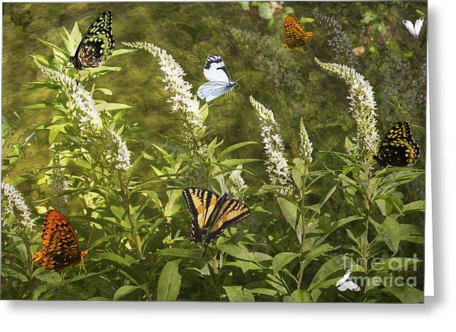 Greeting Card featuring the photograph Butterflies In Golden Garden by Belinda Greb
