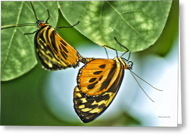 Greeting Card featuring the photograph Butterflies Mating by Thomas Woolworth