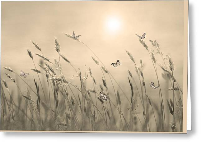 Butterflies Greeting Card by Nina Bradica