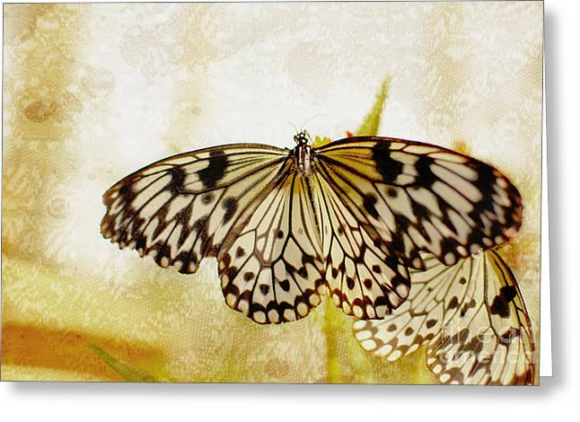 Butterflies On Lace Greeting Card by Floyd Menezes