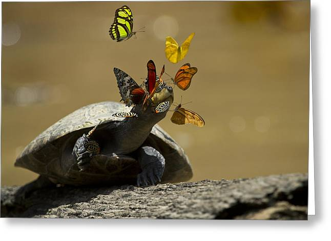 Butterflies Sipping Salt From Turtles Greeting Card by Pete  Oxford