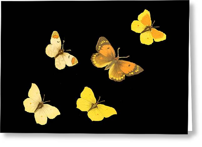 Butterflies Greeting Card by Philip Ralley